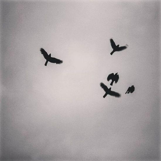 Flyaway Kochi