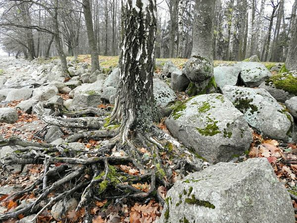 Petergof Tree Nature Stones Cold Temperature The Gulf Of Finland Day Landscape Autumn🍁🍁🍁 Beauty In Nature Sankt-Petersburg Russia