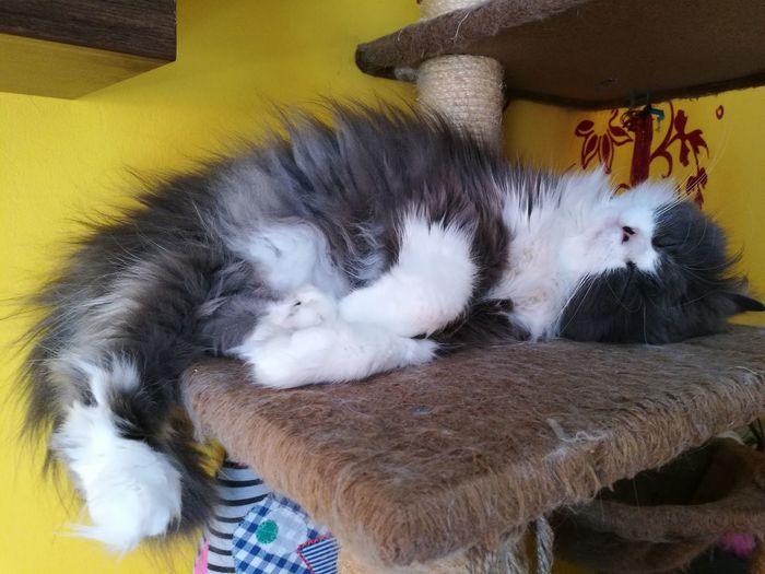 One Animal Bed Sleeping