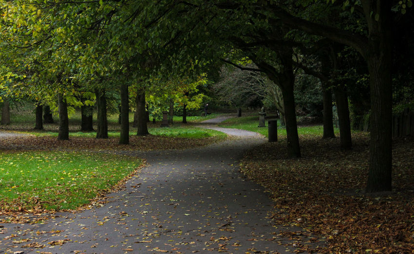 Curved Footpath In Park