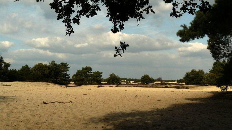 Tree Beach Sand Sky Cloud - Sky