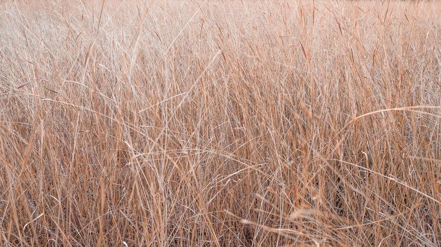 Full frame shot of dry grass