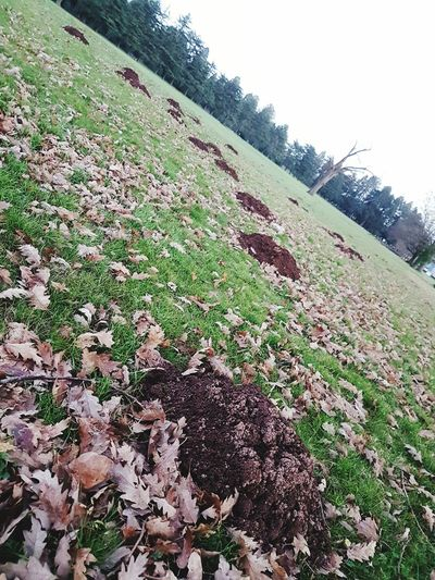 Molehill arcs Nature Rural Scene Sky Field Tree Day No People Landscape Outdoors Beauty In Nature Freshness Green Color National Trust 🇬🇧 Tredegar House Newport Molehill Pattern Animal Themes Mole Angle Skewed Perspective