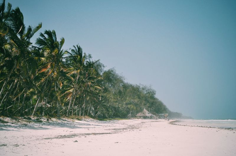 Kenya. Sand Beach Tree Palm Tree Nature Sky No People Water Landscape Beauty In Nature EyeEm Best Shots VSCO Kenya Travel Destinations Africa EyeEm Best Edits Adventure Indian Ocean Ocean View Seascape Ocean Travel The Great Outdoors - 2017 EyeEm Awards
