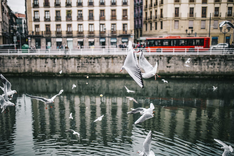 Bird Birds City Cityscape Urban Urbanphotography Business Transportation Contemplation Contemporary Bilbao River Water Seagull No People Red Architecture Day