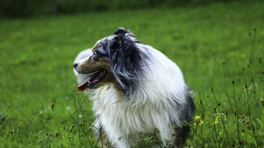View of a dog on field