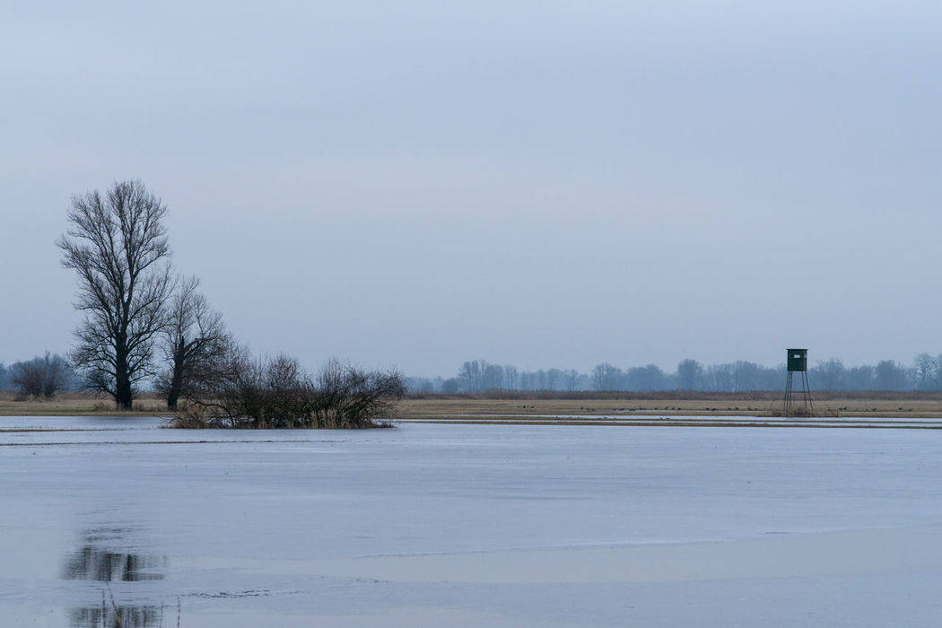Landsscape photography in the area of Oderbruch in Germany. Shades Of Winter Ice Bare Tree Beauty In Nature Cold Cold Temperature Day Exploration Frozen Landscape Nature No People Outdoors Scenics Sky Snow Tranquil Scene Tranquility Tree Water Weather Winter