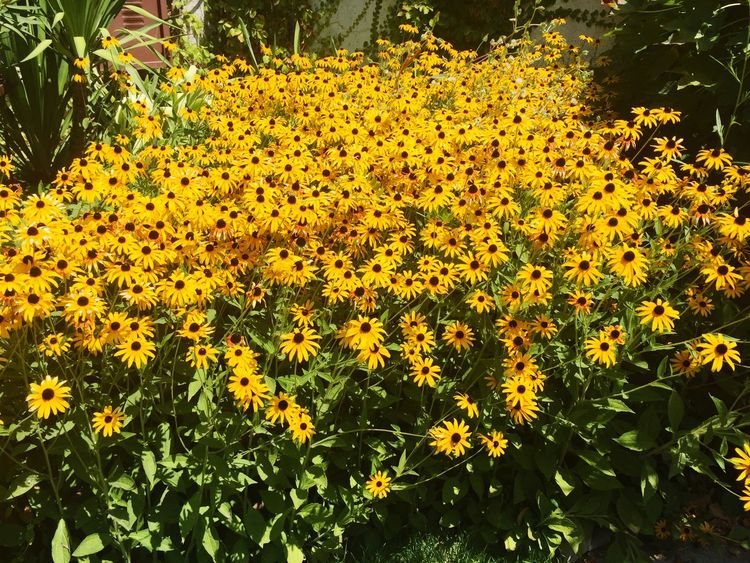 All About Flowers Yellow Flower Yellow Check This Out Hello World Taking Photos Enjoying Life Hanging Out Relaxing