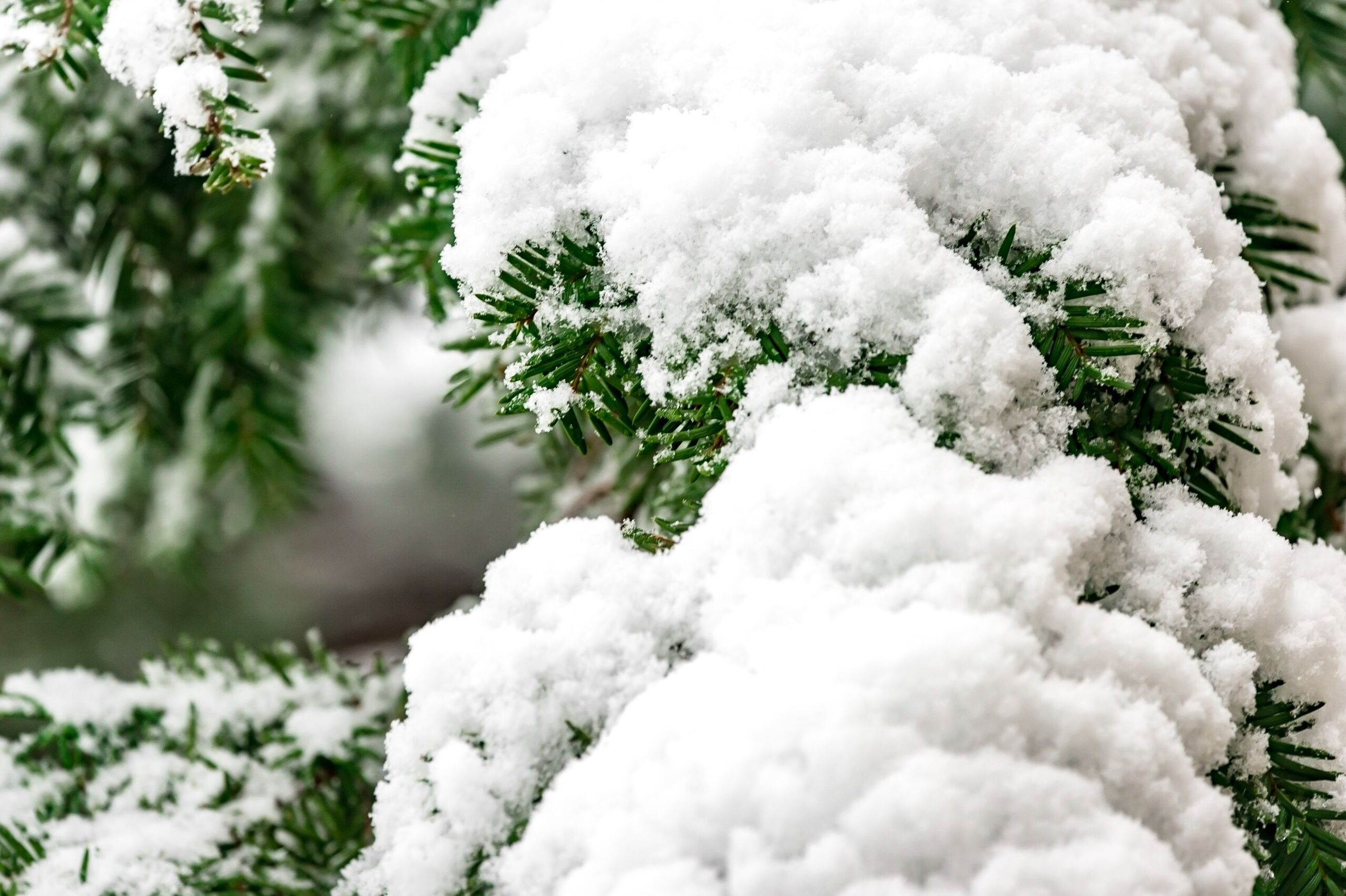 winter, snow, cold temperature, weather, white color, nature, beauty in nature, tree, close-up, no people, frozen, branch, outdoors, day