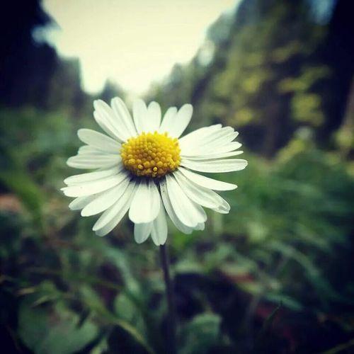 çiçek Flowers Popular Photos Dogadan Guzellik Masumiyet Türkiye Uluyayla Yalnizlik Beautiful