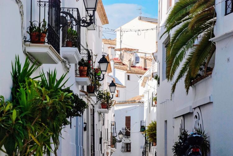 Spanish street Generic Architecture White Altea Spanish SPAIN Village Lane Alley Houses Building Exterior Architecture Plant Built Structure Tree Building Nature Residential District Day City Growth No People Outdoors House
