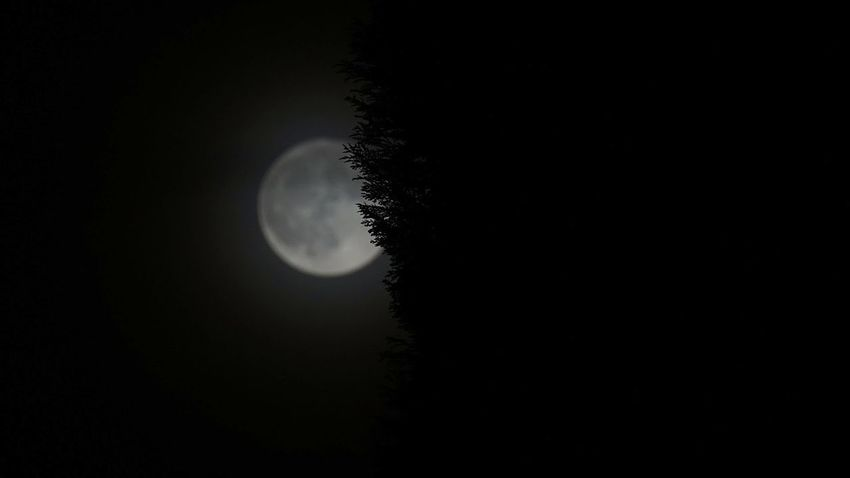 Dezember Vollmond Moon Dark Night Silhouette Astronomy Scenics Beauty In Nature Close-up Sky Outdoors Darkness And Light EyeEm Best Shots - Nature Focus On Foreground Capture The Moment Tadaa Community Taking Photos Garden Photography Tree And Sky Defocused Bokeh It's Wintertime EyeEm Nature Lover