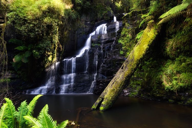 Waterfall Water Motion Beauty In Nature Scenics River Nature No People Tranquility Forest Long Exposure Outdoors Travel Destinations Vacations Australia Victoria Great Ocean Road Tree Freshness