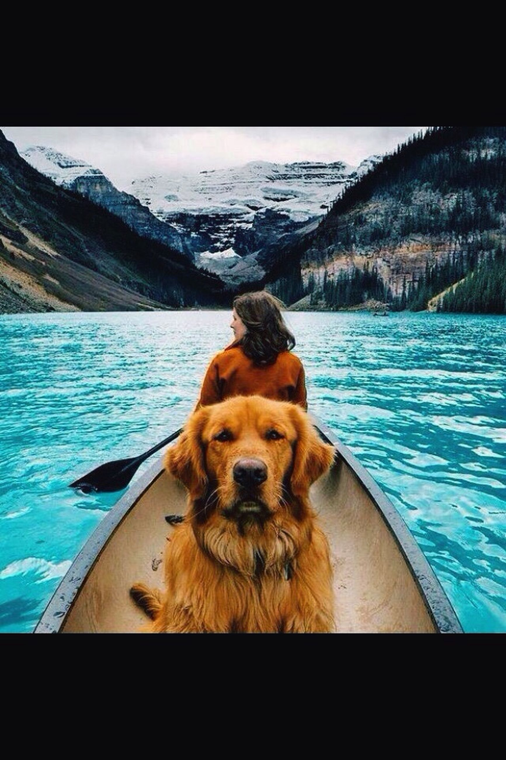 water, pets, animal themes, one animal, dog, domestic animals, mammal, lake, sitting, sky, blue, nature, relaxation, day, sea, tranquil scene, reflection, transfer print, tranquility, no people