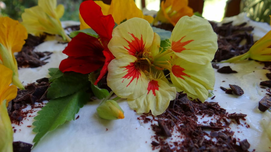 CLOSE-UP OF FLOWER ON CAKE
