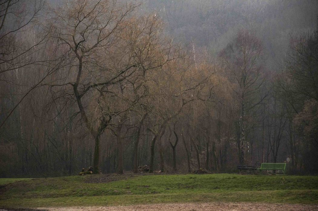 Winter Landscape Bare Tree Beauty In Nature Day Fog Forest Lake Landscape Nature No People Outdoors Scenics Tranquility Tree