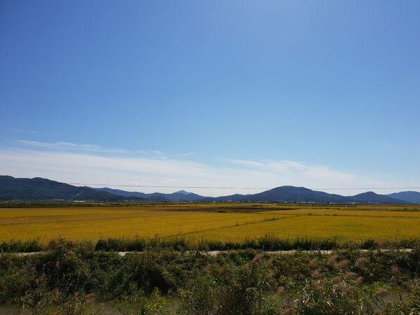 강화도 논 EyeEm Selects Tree Mountain Rural Scene Blue Agriculture Field Springtime Forest Farm Plowed Field