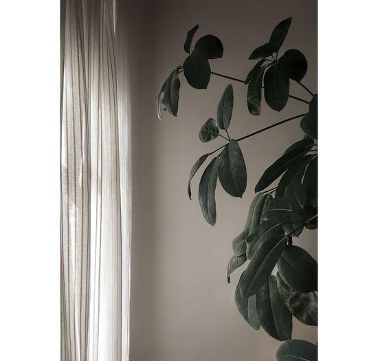 Indoors  Leaf