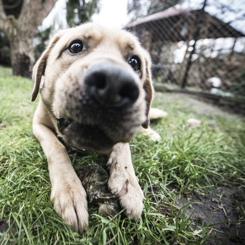 Fun Low Angle View Animal Themes Day Dog Domestic Animals Joy Mammal No People One Animal Outdoors Pets Scenics