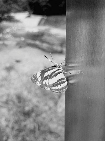 お出掛け Enjoying Life Black And White