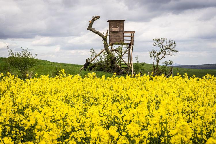 raised blind Eifel Germany Raised Blind Raps Flower