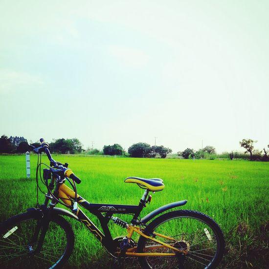 Back to the natural ???? Bike Mountainbike Rice Field Sky
