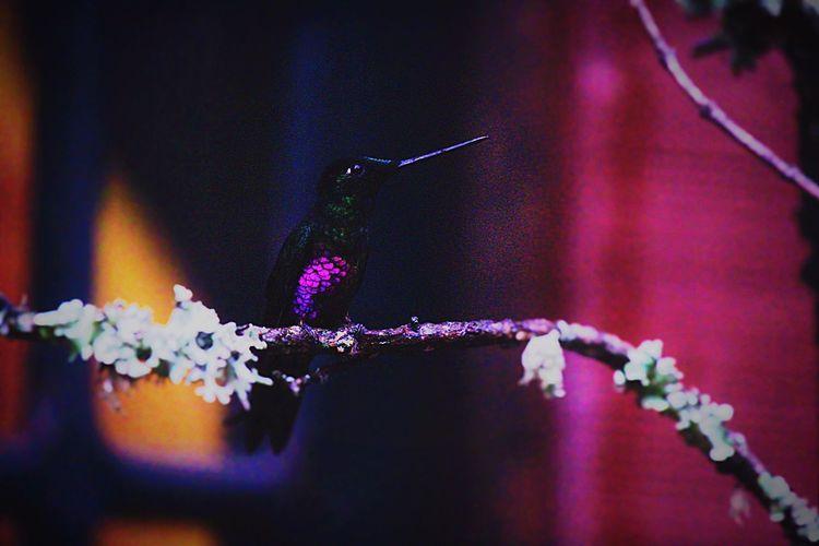 Hummingbird Beautiful Nature Photography