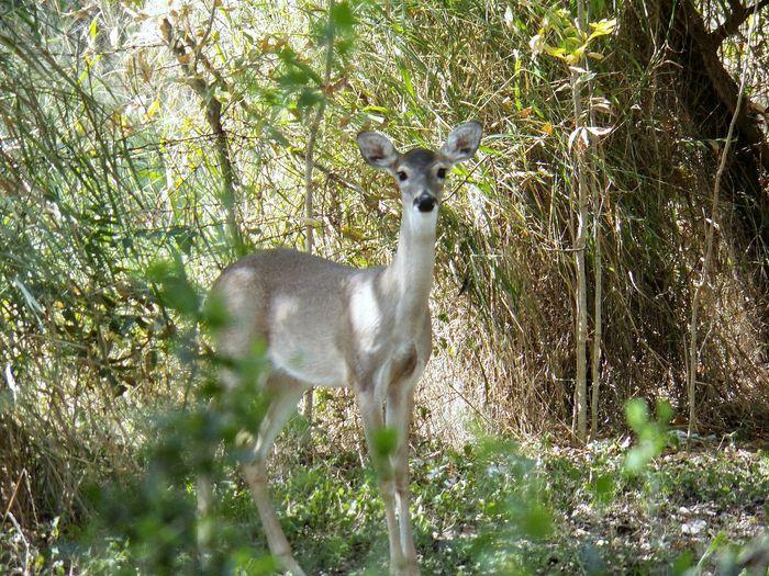 Backyard Deer Kodak Camera