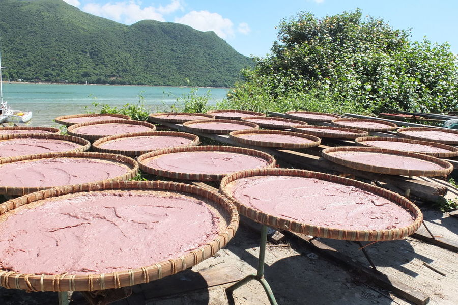 Chinese Cuisine Fermentation Fermentation Foods Food Hong Kong Ingredient Outdoors Shrimp Paste Tai O Village Terasi