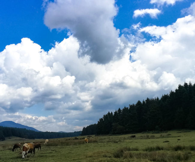 Mountain Tree Agriculture Rural Scene Sky Cloud - Sky Cow Pasture