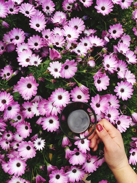 Flower Flowering Plant Plant Freshness Human Hand Hand One Person Real People Human Body Part Beauty In Nature Petal Nature Holding High Angle View Inflorescence Fragility Flower Head Pink Color Vulnerability  Finger