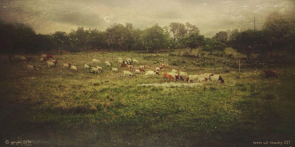 texas hill country 021 NEM Painterly NEM Landscapes AMPt_community NEM Submissions