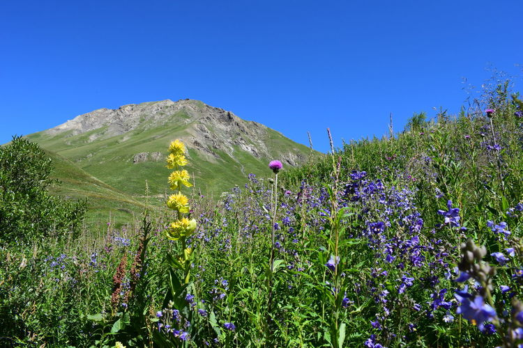 Yellow, pink and purple flowers on a mountain Beauty In Nature Blue Clear Sky Day Field Flower Flower Head Freshness Grass Green Color Growth Landscape Mountain Nature No People Outdoors Plant Scenics Sky Tranquil Scene Tranquility Tree Wildflower The Week On EyeEm