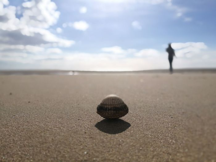 Shell at sandy beach with person walking in background