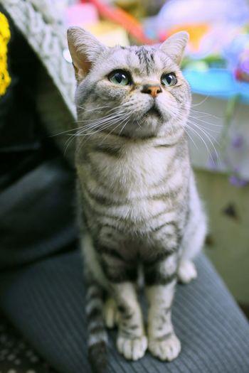 喵 Meow Catcatcat Cute Pets