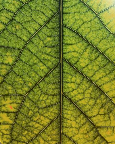 Infinite structure Infinity Plant Green Color Full Frame Day Pattern Backgrounds