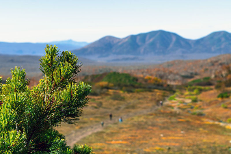 Mountain Plant Scenics - Nature Tranquil Scene Tranquility Beauty In Nature Sky Environment Nature Landscape No People Non-urban Scene Tree Growth Day Green Color Land Mountain Range Outdoors Idyllic Arid Climate