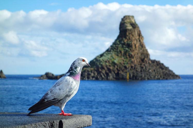 Aci Trezza Catania Sicily Italy Cloud Rock Coast Bird Water Sea Beach Perching Sky