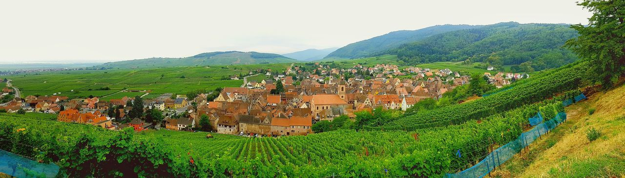 Nature Landscape No People Outdoors Scenics Beauty In Nature Vosges Riquewhir Mountain Picturesque Tourist Destination Town Travel DestinationsGrowth Alsace Route vine scenic Vine Scenic France French Sky Green Color Tree Multi Colored