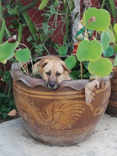 Portrait of a dog in pot