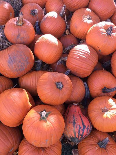Directly above shot of pumpkins for sale at market
