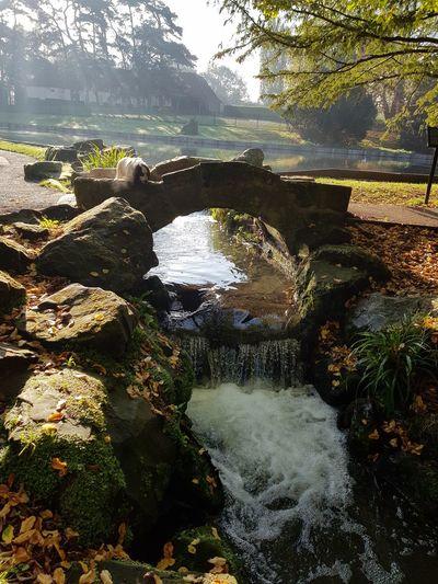 Hollys park
