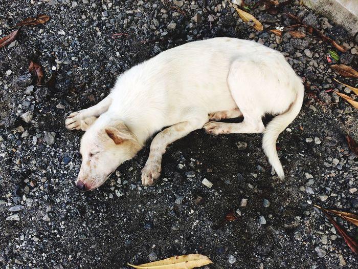 High Angle View Of Stray Dog Sleeping On Gravel