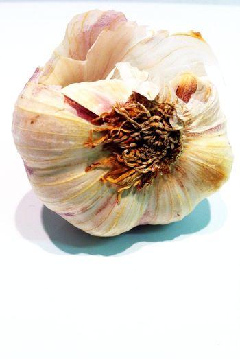 Garlic Mostly White Macro Week