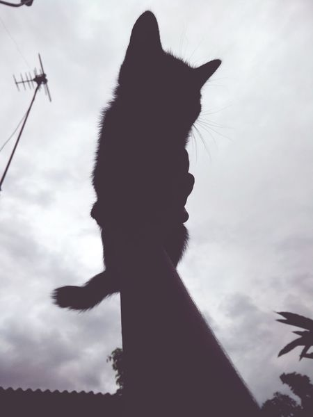 Taking Photos Meow! Cat Kittenoftheday Sky And Clouds