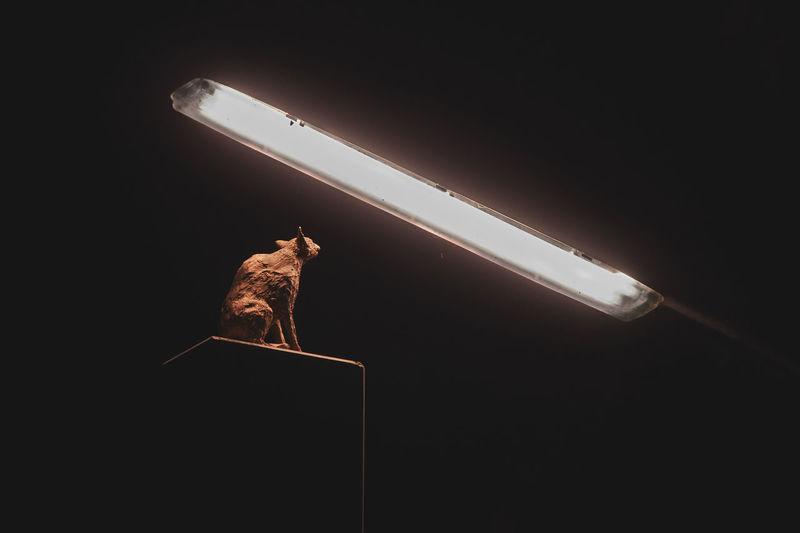 Cat at night.