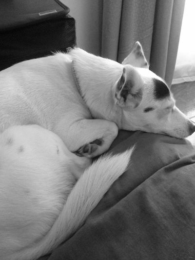Ilovemydog Puppy Love Crossbreed Black And White Dog Love Dogslife