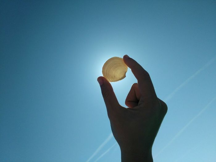 Cropped Image Of Person Holding Seashell Against Clear Blue Sky