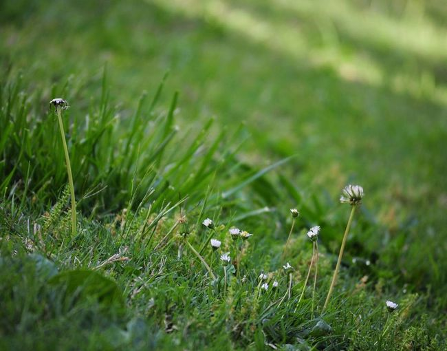 Grass Nature Growth Green Color Field Selective Focus Beauty In Nature Outdoors Close-up Meadow No People Uncultivated Flower Fragility Day Mushroom Fungus Plant Freshness Toadstool