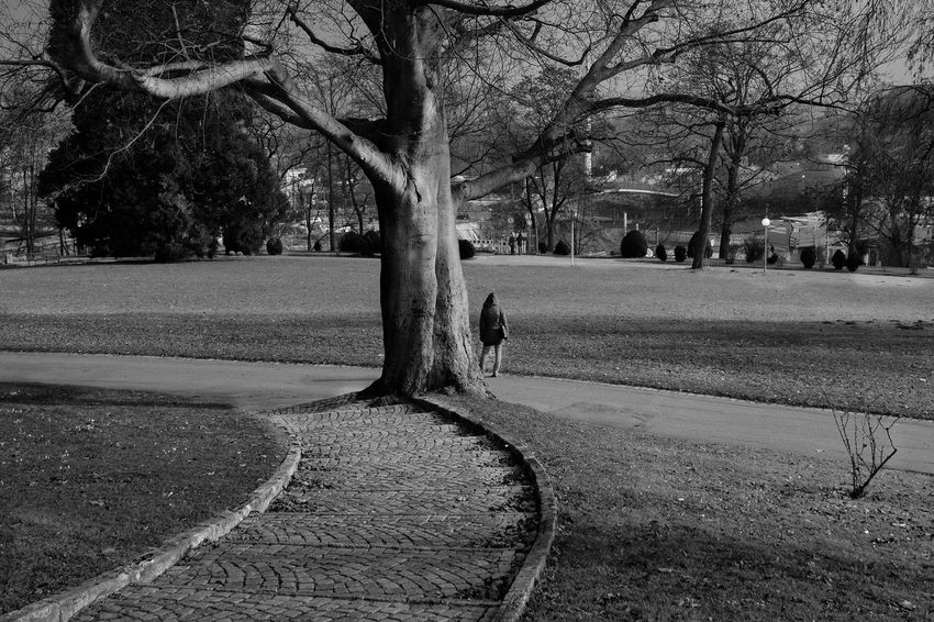 Black & White February Fuji X-M1 Bare Tree Beauty In Nature Black And White Blackandwhite Branch Day Germany Nature No People Outdoors Road Tree Tree Trunk Women Streetphotography Bw_collection Stuttgart Schwarzweiß Lost In The Landscape